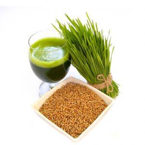 Organic wheat grain seeds