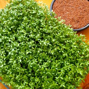 ORGANIC SPROUTING SEEDS