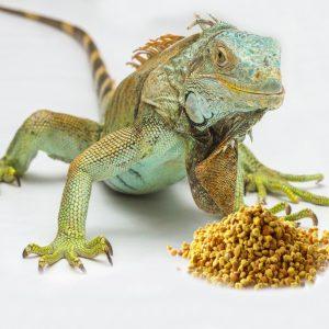 Pollen for Reptiles