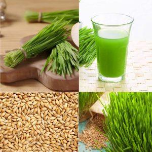 Grain Seeds for Grasses